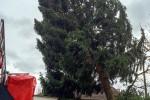 Baum droht zu fallen - Sturmtief Niklas
