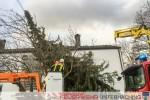 Baum in Stromleitung - Sturmtief Niklas